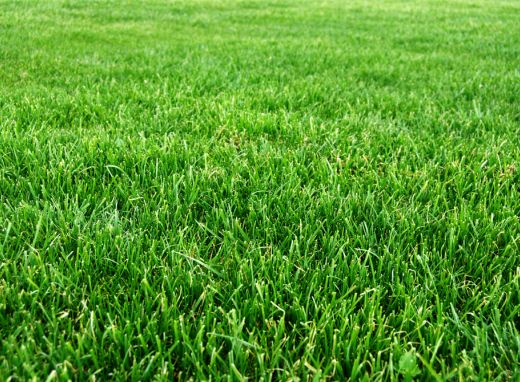 how to grow bermuda grass in georgia
